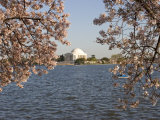 Boaters in Tidal Basin with Cherry Trees and Jefferson Monument Photographic Print by Charles Kogod