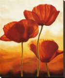 Poppies in Sunlight I Stretched Canvas Print by Andrea Kahn