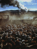 Cattle Drive at Trinchera Ranch Premium Photographic Print by Loomis Dean