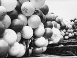 Balloons Lying on Ground Prior to Release Premium Photographic Print by Ralph Crane