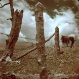 Lone Horse Standing Between Broken Fence under Storm Clouds, Trinchera Ranch Photographic Print by Loomis Dean