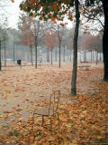 Lone Chair Sitting Amongst Fallen Leaves in Tuileries Gardens Premium Photographic Print by Alfred Eisenstaedt