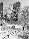 Central Park na een sneeuwstorm Fotoprint van Alfred Eisenstaedt