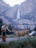 Father and Son Feeding a Wild Deer in Yosemite National Park with Yosemite Falls in the Background Photographic Print by Ralph Crane