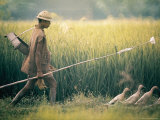 Balinese Farmer Herding His Flock of Ducks Through a Field Premium Photographic Print by Co Rentmeester