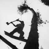Lumberjack Cutting Tree in New Zealand Photographie par George Silk