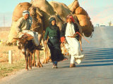 Local Lebanese Arabs Traveling on Road with Caravan of Camels and Donkey Loaded with Goods Lmina fotogrfica de primera calidad por Carlo Bavagnoli