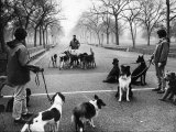 Dog Walkers in Central Park Premium Photographic Print by Alfred Eisenstaedt