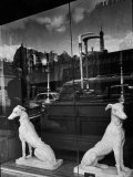 Ceramic Hounds in Window of Antique Shop Premium Photographic Print by Alfred Eisenstaedt