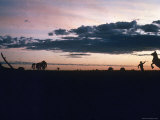 Dawn in the Australian Outback Finds a Stockman Trying to Calm His Rearing Horse Premium Photographic Print by George Silk