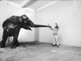 Life Photographer Arthur Schatz with Elephant While Shooting Story on the Franklin Park Zoo Premium Photographic Print by Arthur Schatz