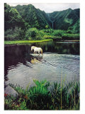 Horse Wading in Stream Amid Hills in Papera Region, South Seas Premium Photographic Print by Eliot Elisofon