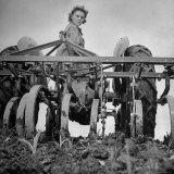 Patricia Colleen Altree Harrowing a Corn Field Photographic Print by J. R. Eyerman