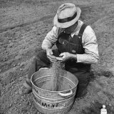 Farmer Straining Grain Through His Fingers Photographic Print by Bernard Hoffman