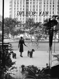 Chic Woman Walking Her Poodles Along Sidewalk on Fifth Avenue Premium Photographic Print by Alfred Eisenstaedt