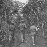 Gis on Patrol For Japanese Snipers in Jungle of New Georgia Island, Solomon Islands, During WWII Photographic Print by William C. Shrout