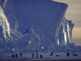 Adelie Penguins, Antarctica Fotografie-Druck von Michael Rougier