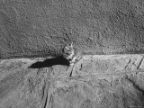 Kitten Sitting on Sunny Pavement Premium Photographic Print by Gjon Mili