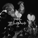 Screen Test For Pathe Newsreel Rooster Photographic Print by Cornell Capa