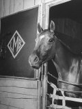 Jockey Johnny Longden's Horse Busher Standing in Stable Premium Photographic Print by Martha Holmes