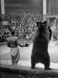 Dancing Bear at the Circus Premium Photographic Print by Thomas D. Mcavoy