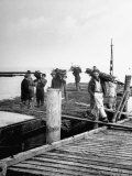 Brushwood and Willows Being Unloaded at the Improvised Pier Close to Veere Premium Photographic Print by George Rodger