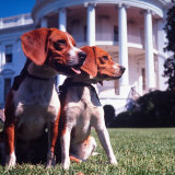 Him and Her, Pet Beagles of President Lyndon B. Johnson, Sitting Together on Lawn of White House Photographic Print by Francis Miller