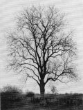 Ash Tree in Great Britain During Winter Season Photographic Print