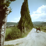 Farm Family in Mule Drawn Cart on Road Lined with Cypress Trees Photographic Print by Gjon Mili
