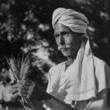 Indian Farmer Bandidin, Who Raised 64 Bushels of Wheat Per Acre, Holding Some of His Record Wheat Photographic Print by James Burke
