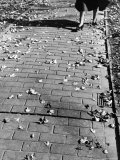 Autumn Leaves Scattered on Brick Walkway with View of Woman from Knees Down, Walking in High Heels Photographic Print by Alfred Eisenstaedt