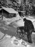 Gentleman Hauling Firewood to His Home Through the Deep Snow in Order to Keep His Fire Going Impresso fotogrfica premium por George Silk
