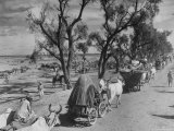 Convoy of Sikhs Migrating to East Punjab After the Division of India Premium Photographic Print by Margaret Bourke-White
