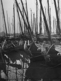 Fishing Junks with a Jungle of Masts Silhouetted Against the Sky, Floating on the Whangpoo River Premium Photographic Print by Jack Birns