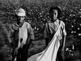 African American Children - Are Cotton Pickers Pulling Sacks Along Behind Them as They Pick Cotton Premium Photographic Print by Ben Shahn