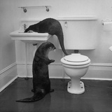Otters Playing in Bathroom Fotografisk tryk af Wallace Kirkland