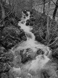 Gentle River Flowing Through Lonely Woody Forest Where Wordsworth Wrote Poetry Premium Photographic Print by Nat Farbman