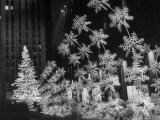 Christmas Decorations at Rockefeller Plaza Premium Photographic Print by Andreas Feininger