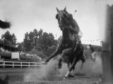 Horse Twisting Its Body as It Hits Turn During Race at Cumberland Premium Photographic Print by Hank Walker