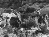 Prospector Travis Marlowe Continuing His Search in Superstition Mountains of Southern Arizona Premium Photographic Print by Bill Ray