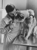 Assistant Caring For a Dog at the Humane Society Premium Photographic Print by Paul Schutzer