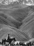 Cowboy Driving Dispirited Cows to Mountain Pastures Premium Photographic Print by Stan Wayman
