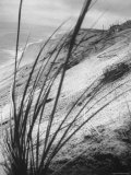 Dunes in the Cape Cod National Park Photographic Print by Ralph Morse