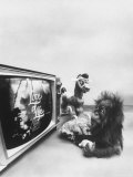 Ape Participating in a Study of Aoe Addiction to TV Premium Photographic Print by Yale Joel