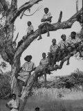 Boy Scout Troop Sitting in a Tree Photographic Print by Dmitri Kessel