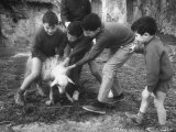 Rotolo Brothers Playing with a Sheep in Sicily After Cataract Operations Which Restored Their Sight Lmina fotogrfica de primera calidad por Carlo Bavagnoli