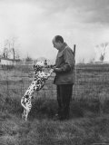 Adlai E. Stevenson on His Farm with Pet Dalmatian Artie Premium Photographic Print by Francis Miller