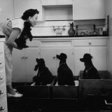 Marian Elliott, Dog Sitting Four French Poodles Photographic Print by Leonard Mccombe