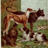 Illustration by Kronheim of Various Dogs, from Aunt Louisa's Birthday Gift Photographic Print