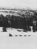 Dog Sledding Team Premium Photographic Print by Nat Farbman